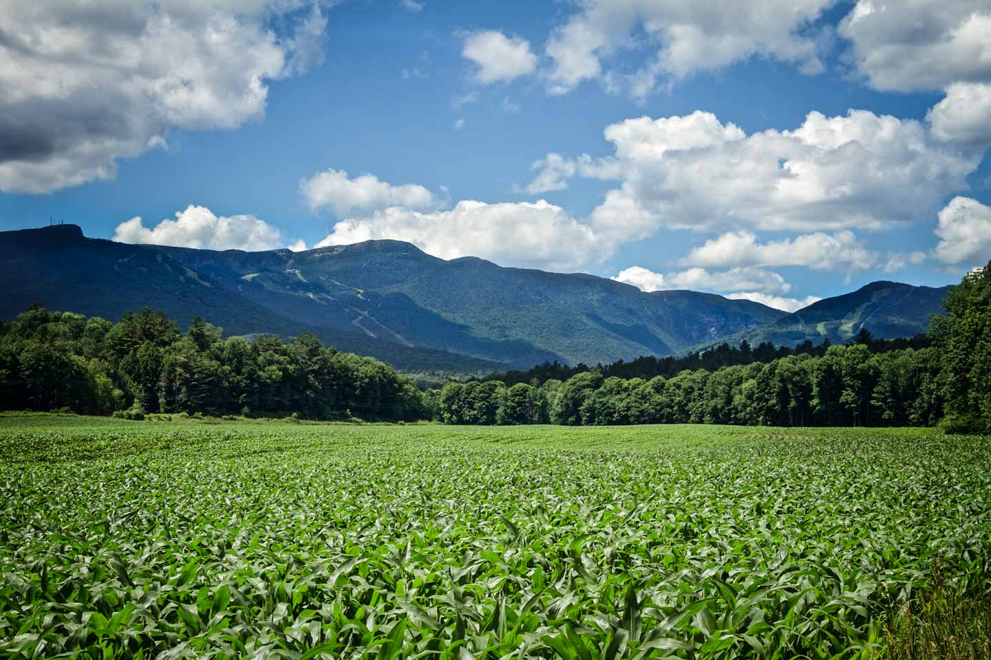 green cornfields in front mountain with ski trails in the background clouds in the sky