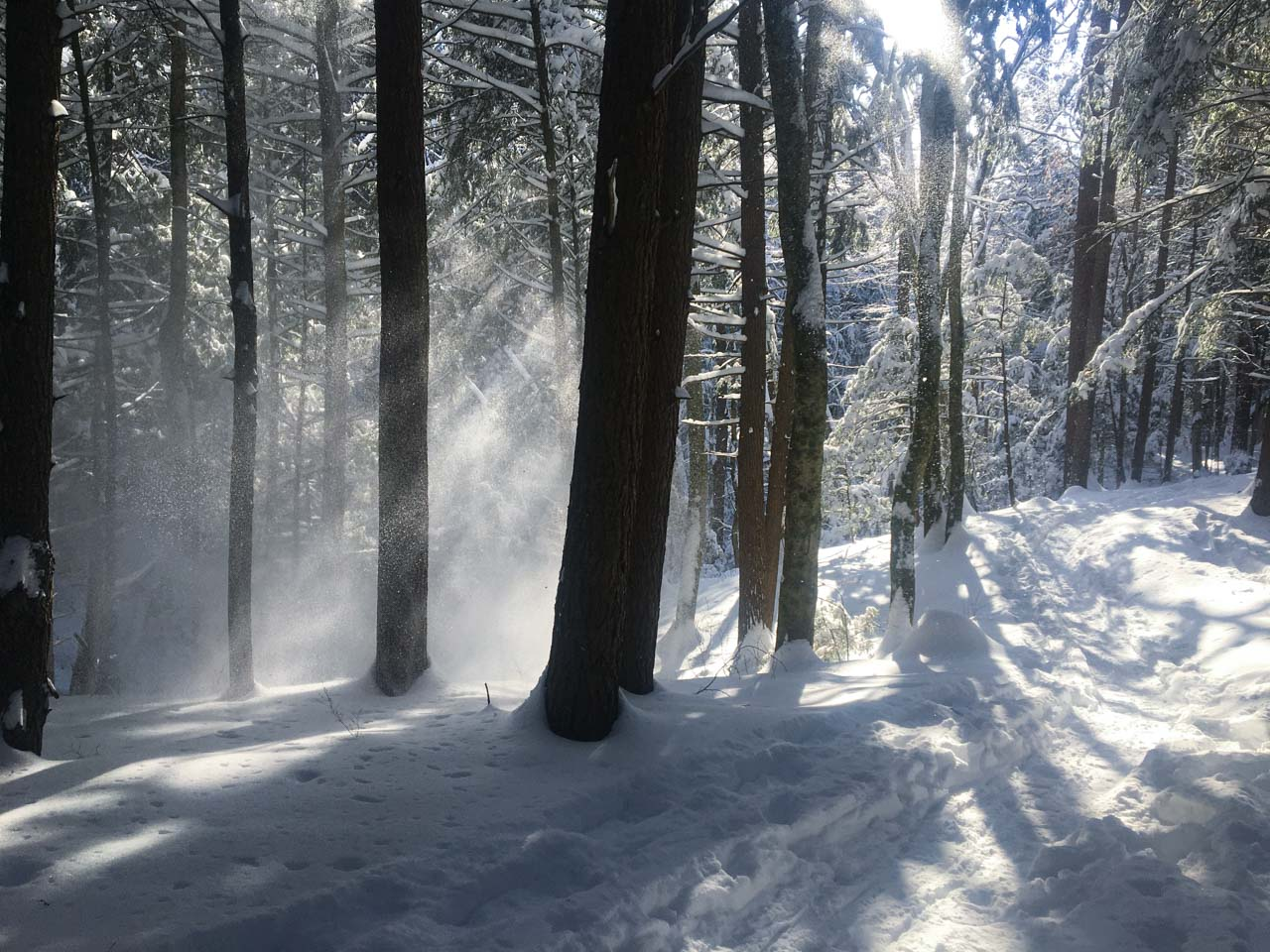 Snow blowing through the woods with sunlight behind it snowshoe trail on right